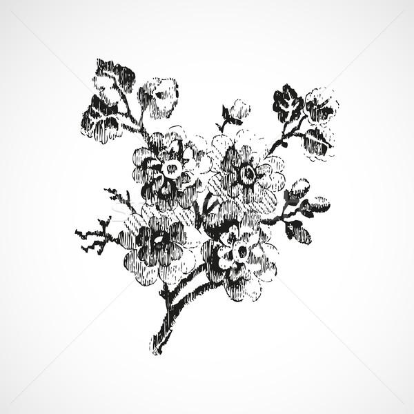 Foto stock: Dibujado · a · mano · ramita · flores · vintage · aislado · vector