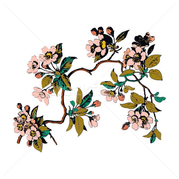 Színes botanikus ágak levelek virágok fehér Stock fotó © cosveta