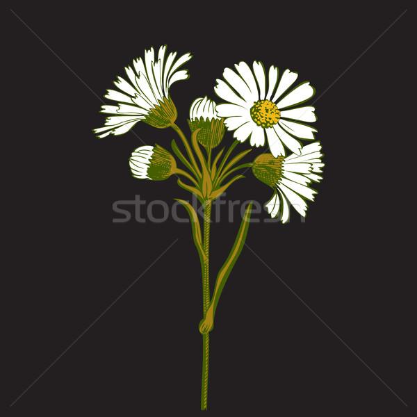 Dessinés à la main coloré bouquet camomille fleurs isolé Photo stock © cosveta