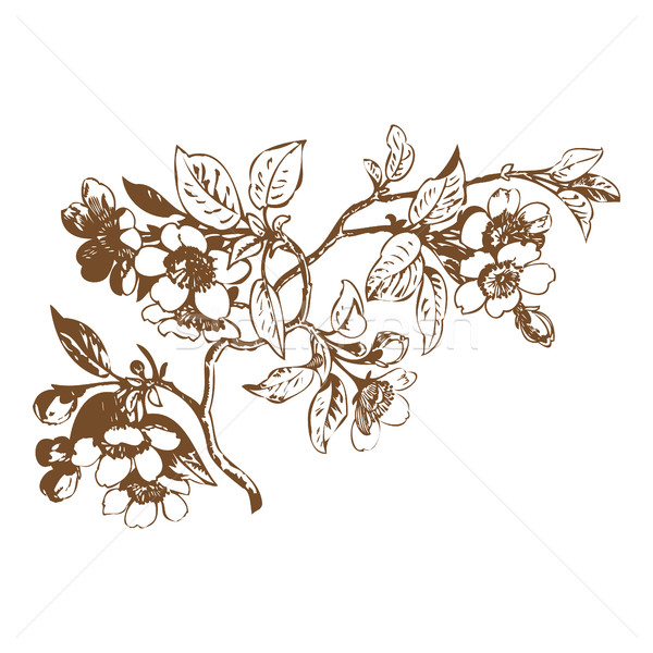 Kiraz çiçekler sakura düğün doğa Stok fotoğraf © cosveta