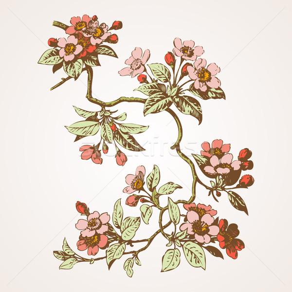 Foto stock: Cereza · flores · sakura · boda · naturaleza