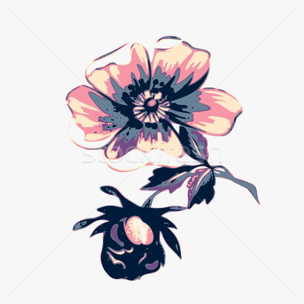 Branch with flowers roses isolated. Vintage grunge background. C Stock photo © cosveta