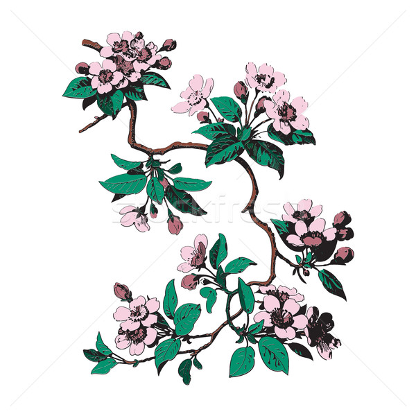 Colorful Botanical branches with leaves and flowers on white bac Stock photo © cosveta