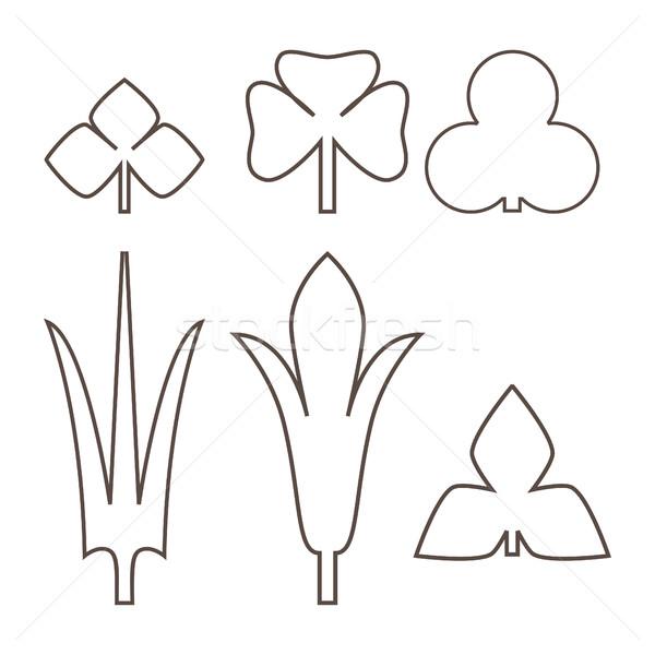 Foto stock: Decorativo · folhas · isolado · preto · e · branco