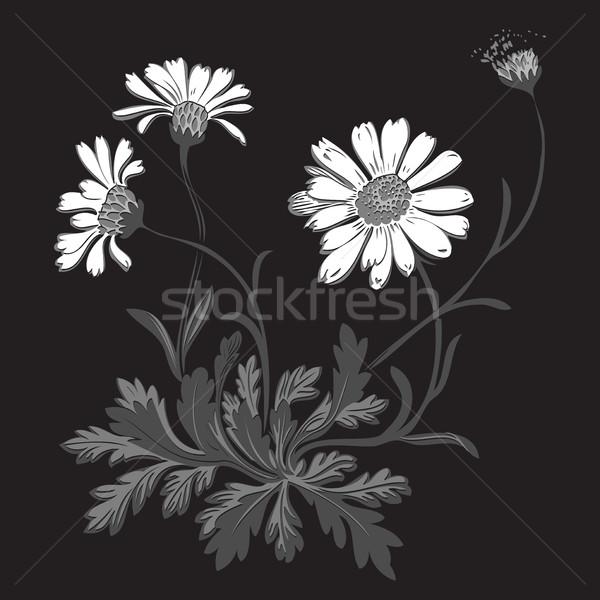 Dessinés à la main bouquet camomille fleurs isolé noir Photo stock © cosveta