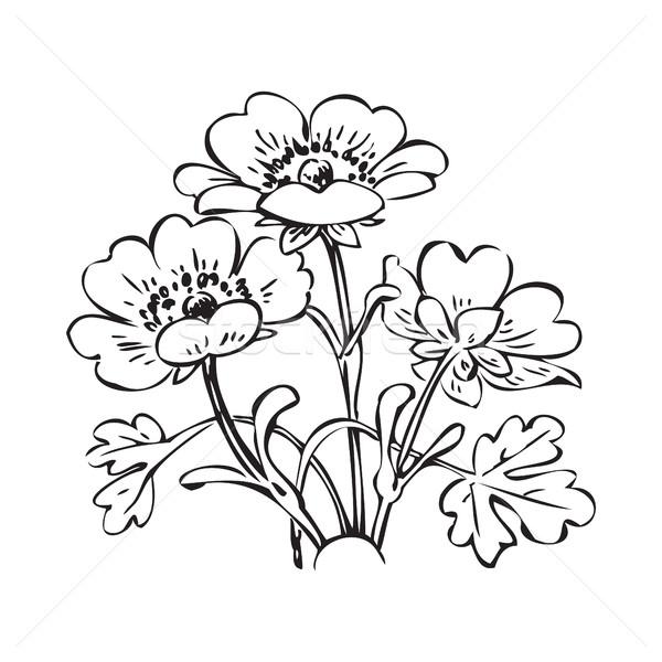 Floral arbusto retro preto e branco vetor Foto stock © cosveta