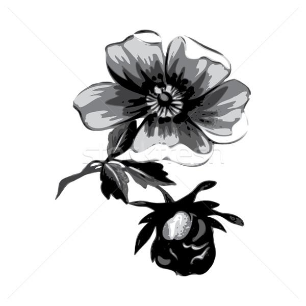 филиала цветы роз изолированный Vintage Гранж Сток-фото © cosveta