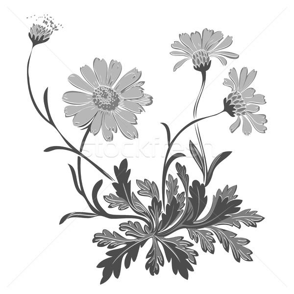 Dandelion kwiaty odizolowany biały rysunek Zdjęcia stock © cosveta