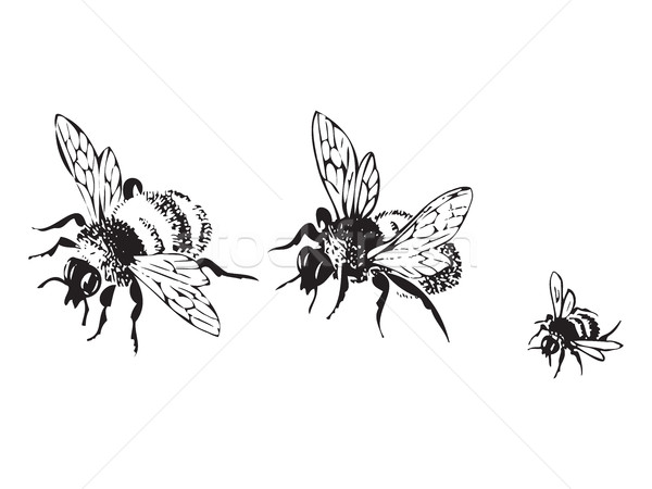 Stock photo: Vector engraving antique illustration of honey flying bees, isol