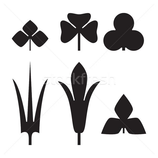Dekoratif siyah yaprakları model ayarlamak yalıtılmış Stok fotoğraf © cosveta