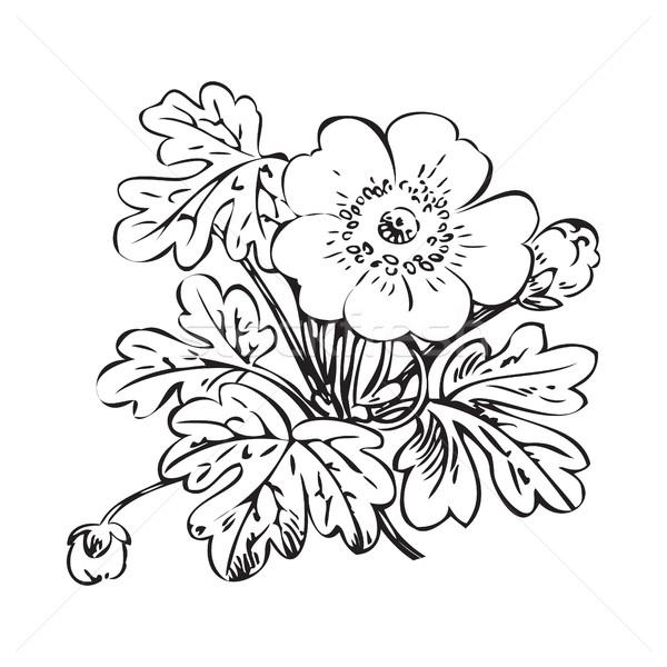 Floral bush retro black on white background vector, hand drawn d Stock photo © cosveta
