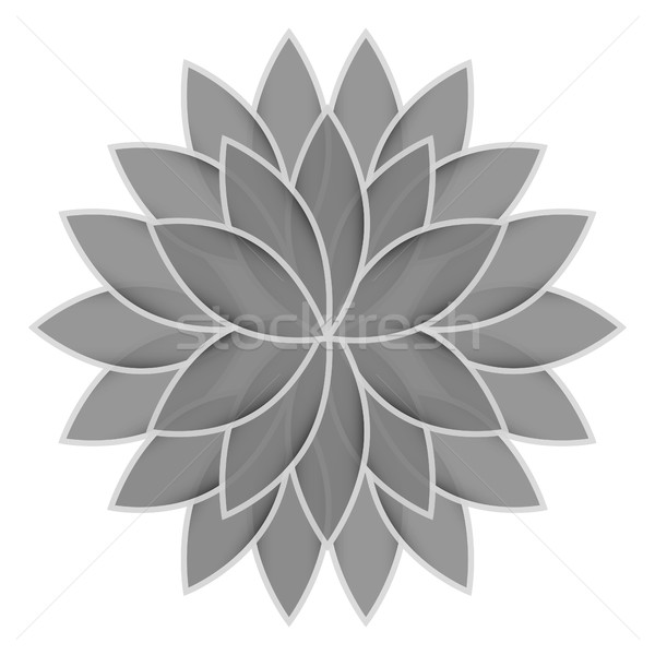Cinza flor lótus branco isolado natureza Foto stock © cosveta