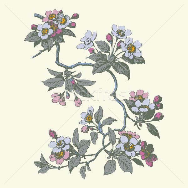 Cereja flores sakura casamento natureza Foto stock © cosveta