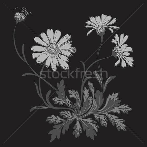 Stock fotó: Kézzel · rajzolt · pitypang · virágok · izolált · fekete · rajz