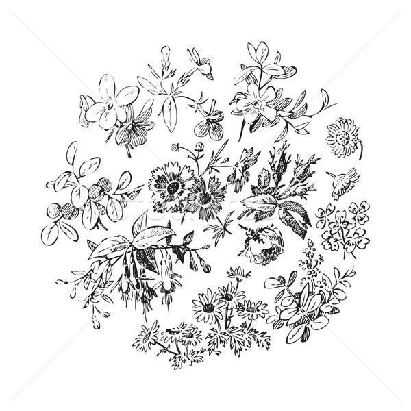 Pradera flor hoja corona aislado blanco Foto stock © cosveta