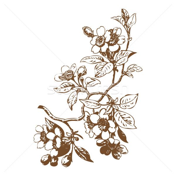 Wiśniowe kwiaty sakura ślub charakter Zdjęcia stock © cosveta