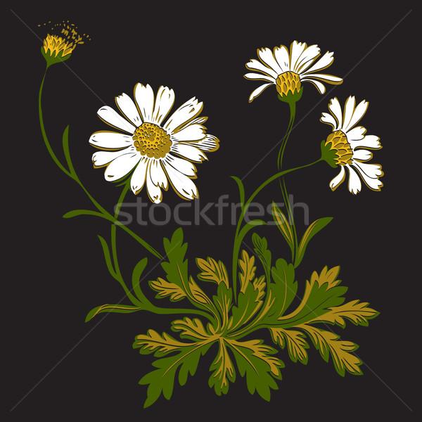 Colorido buquê camomila flores isolado Foto stock © cosveta