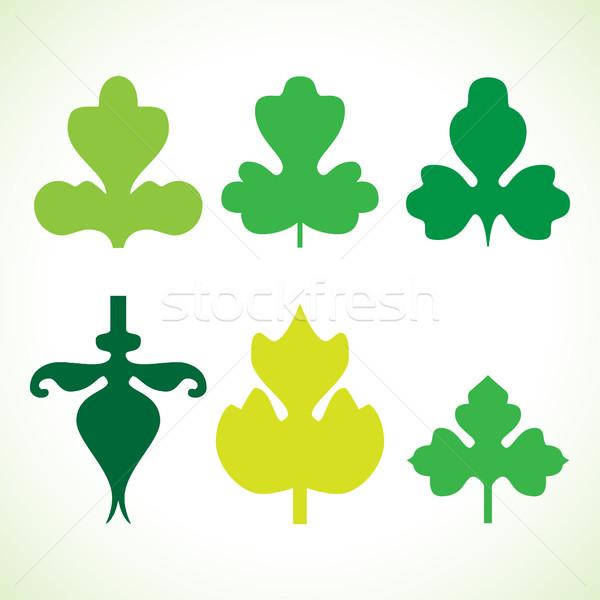 Decorativo folhas verdes padrão conjunto isolado branco Foto stock © cosveta