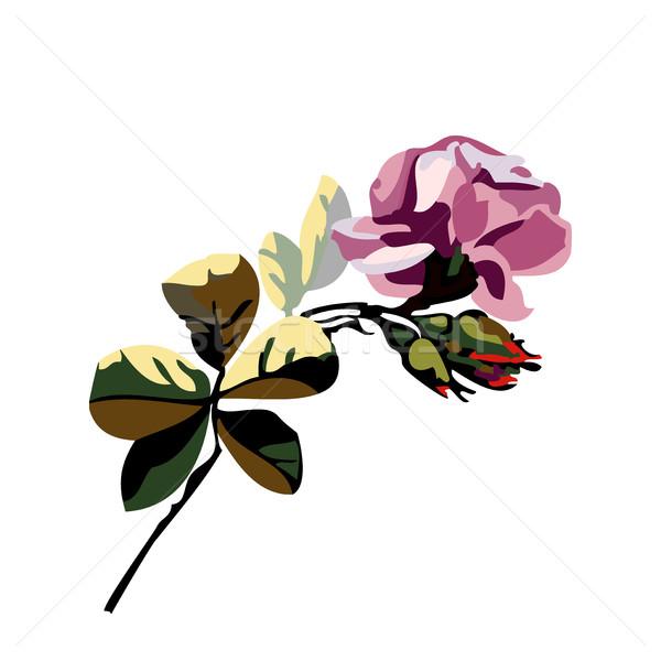 Vektör güzel buket çiçekler güller Stok fotoğraf © cosveta