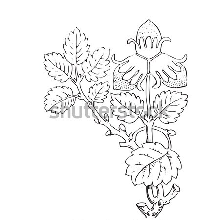 Hand drawn strawberry bush with berries, contour vector illustra Stock photo © cosveta