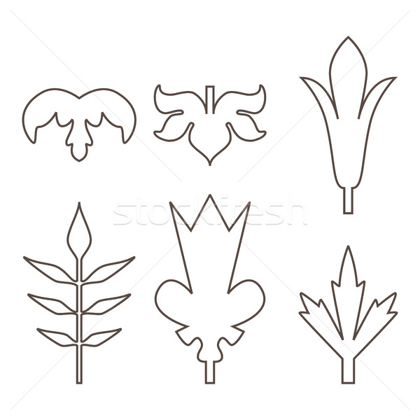 Decorative outline leaves icons set isolated black on white back Stock photo © cosveta