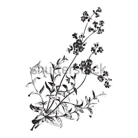 Botanical hand drawn branches with flowers isolated, herbal flow Stock photo © cosveta