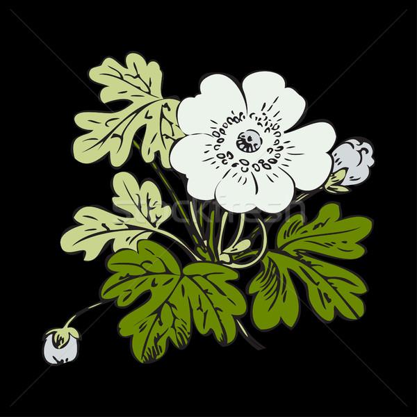 フローラル 茂み レトロな 黒 ベクトル 手描き ストックフォト © cosveta