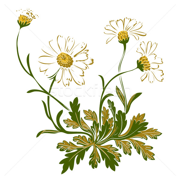 Foto stock: Dibujado · a · mano · colorido · ramo · manzanilla · flores · aislado