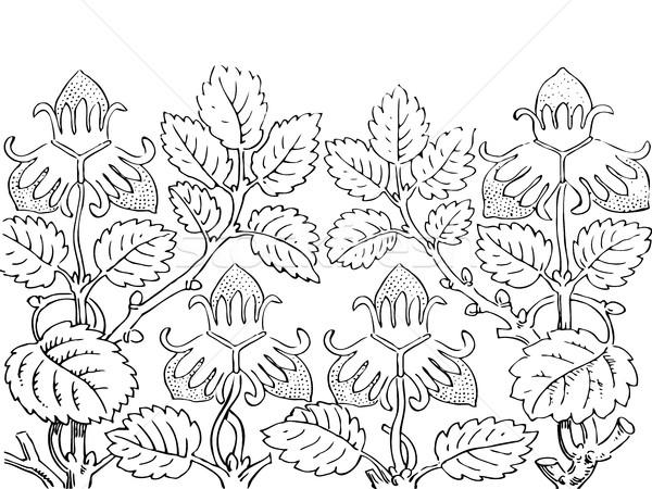 Morango arbusto contorno vetor Foto stock © cosveta
