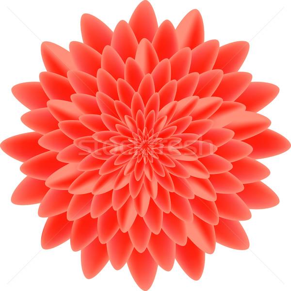 Czerwony odizolowany biały charakter projektu liści Zdjęcia stock © cosveta