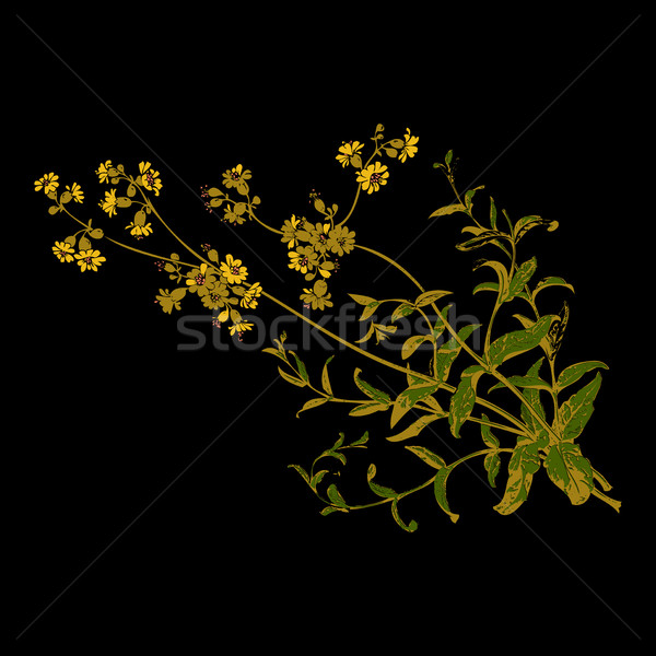 Colorful botanical hand drawn branches with flowers isolated, he Stock photo © cosveta