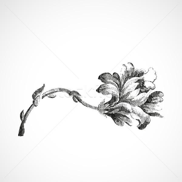 Dibujado a mano horizontal flor Lily vintage aislado Foto stock © cosveta