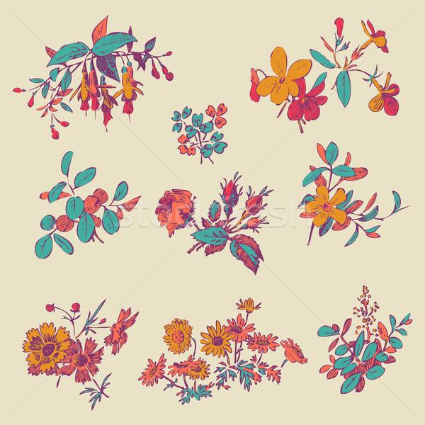 Prado flor folha conjunto vetor isolado Foto stock © cosveta