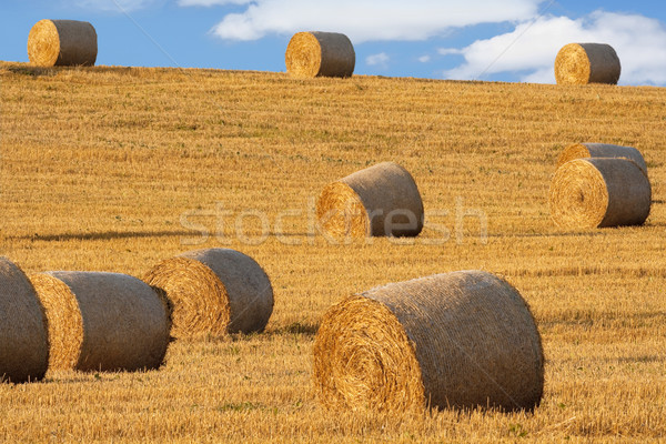 Széna mező kék ég Csehország nyár farm Stock fotó © courtyardpix