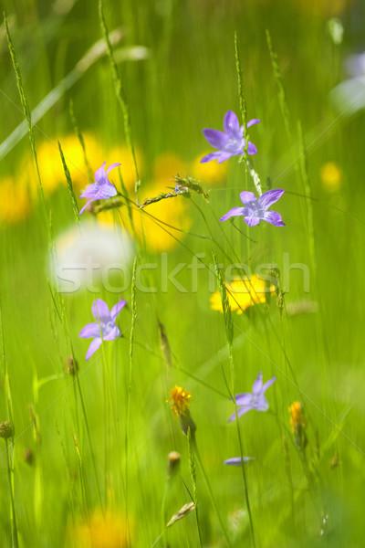 Flores silvestres primavera exuberante verde jardín corto Foto stock © courtyardpix