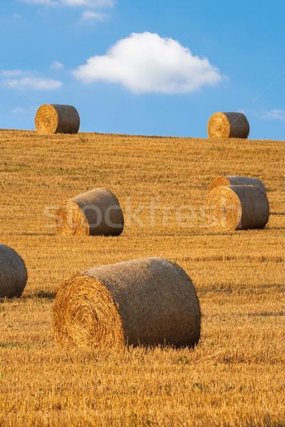 Fieno campo cielo blu Repubblica Ceca estate farm Foto d'archivio © courtyardpix
