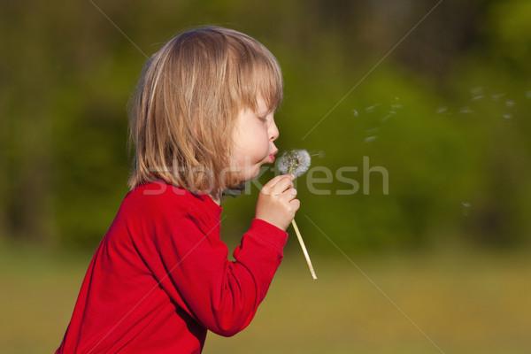 Jongen paardebloem lang blond haren Stockfoto © courtyardpix