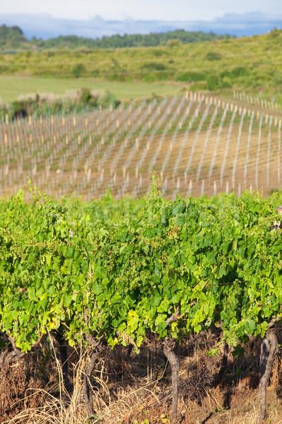 vineyard in croatia Stock photo © courtyardpix
