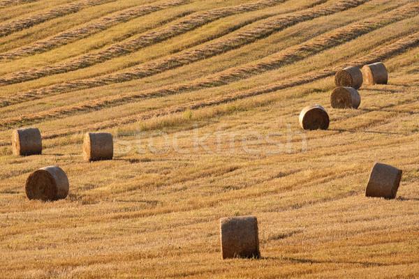 Feno campo blue sky República Checa verão fazenda Foto stock © courtyardpix