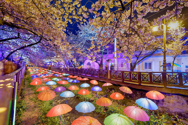 cherry blossoms at night, busan city in south korea Stock photo © cozyta
