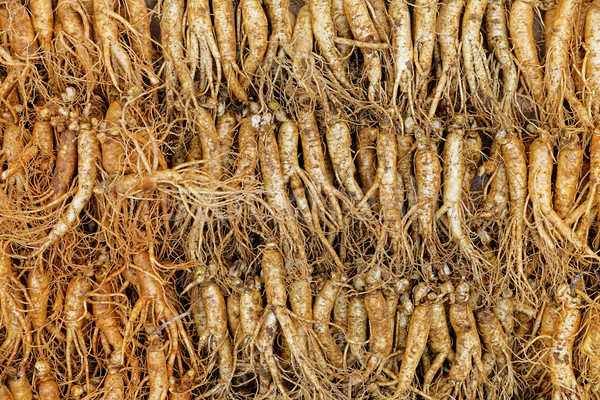 Stock photo: crowd of real ginseng
