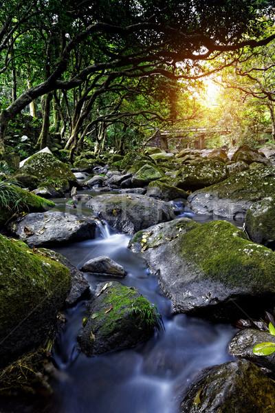 Cascade falls over mossy rocks Stock photo © cozyta