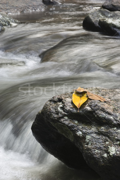 Leafs on a rock with water spring Stock photo © cozyta