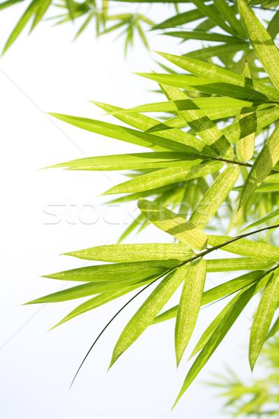 Bella bambù confine foglia sfondo verde Foto d'archivio © cozyta