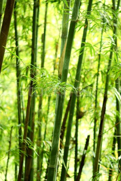 Bambù natura giorno albero foresta japanese Foto d'archivio © cozyta
