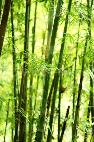 Bambú naturaleza día árbol forestales japonés Foto stock © cozyta