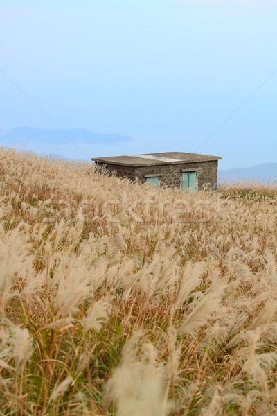 Vecchio pietra casa erba montagna foresta Foto d'archivio © cozyta