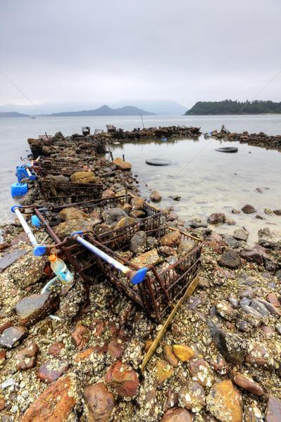 Pollution fleur eau voiture nature Photo stock © cozyta