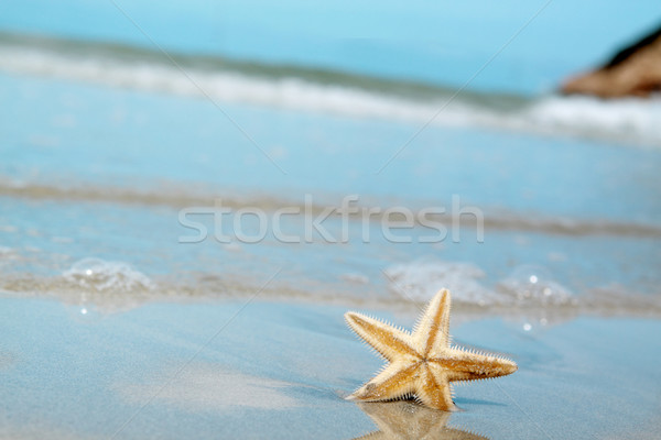 Starfish spiaggia texture pesce natura mare Foto d'archivio © cozyta