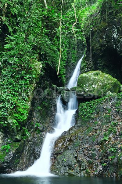 Charakter dekoracje lasu krajobraz świat lata Zdjęcia stock © cozyta